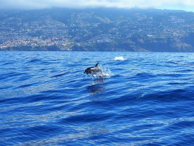 excursion-bateau-madere-dauphin3