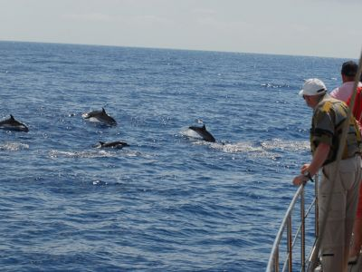 excursion-bateau-madere-goelette-dauphins